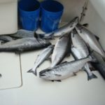 salmon-fishing-img-10